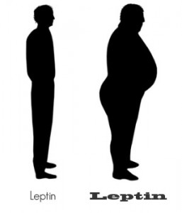 Leptin is the Fat Cell Hormone, and It Resists!